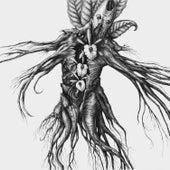 Iv: Mandragora by The Botanist