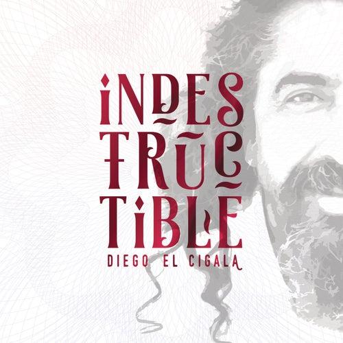 Indestructible by Diego El Cigala
