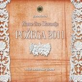 Zlatne Žice Slavonije Požega 2011 - Tamb by Various Artists