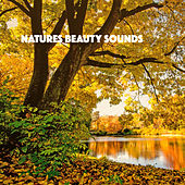 Natures Beauty Sounds by Various Artists