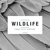 Wildlife - Unique Music Selection, Vol. 11 by Various Artists