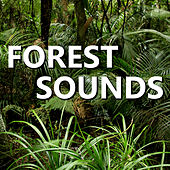 Forest Sounds by Forest Sounds For Relaxation