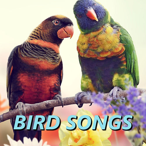 Bird Songs by The Birdsongs