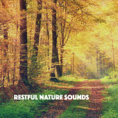 Restful Nature Sounds by Various Artists