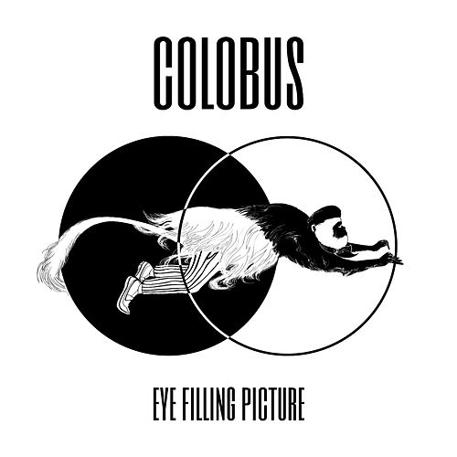 Eye Filling Picture by Colobus