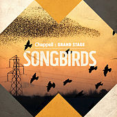 Song Birds by Various Artists