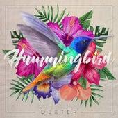Hummingbird by Dexter