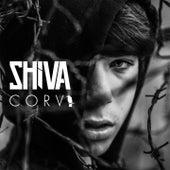 Corvi by Shiva