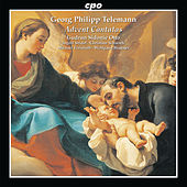 Telemann: Advents Cantatas by Various Artists