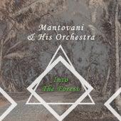 Into The Forest von Mantovani & His Orchestra
