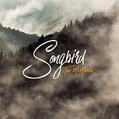 Songbird by Tim McMorris