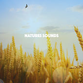 Natures Sounds by Various Artists