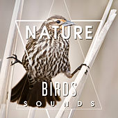 Nature Birds Sounds – Calming Sounds, Singing Birds, Sounds of Forest, Rest a Bit, Free Time by Echoes of Nature