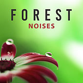 Forest Noises – Best Nature Sounds, Relax with New Age Music, Calm Down, Inner Harmony by Relaxing Sounds of Nature