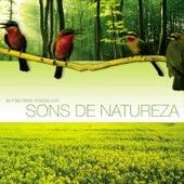 As Mais Belas Músicas com Sons de Natureza de Various Artists