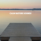 Calm Nature Sounds by Various Artists