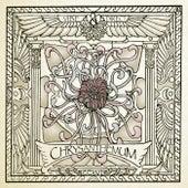 Chrysanthemum de Vibe