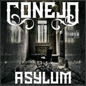 Asylum by Conejo