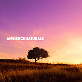 Ambience Naturale by Various Artists