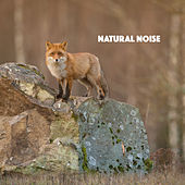 Natural Noise by Various Artists