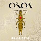 Orok by Kalio Gayo