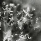 Daffodils by Jacaszek