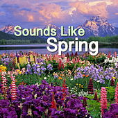 Sounds Like Spring by Various Artists