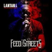 Live From Lantana by Lantana
