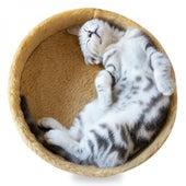 Deep Relaxing Sleep von Entspannungsmusik