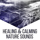 Healing & Calming Nature Sounds – Music to Rest, New Age Relaxation, Focus on Nature, Stress Free by Echoes of Nature