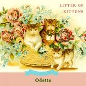 Litter Of Kittens by Odetta
