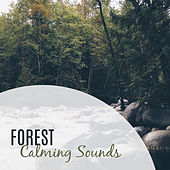 Forest Calming Sounds – Nature Sounds, Music to Rest, Music for a Walk, Chill Yourself by Bird Sounds