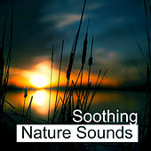 Soothing Nature Sounds – Easy Way to Relax, Rest with Nature Music, Calm Down, Mind Peace de Nature Sound Collection