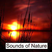 Sounds of Nature – Relaxing Waves for Pure Mind, Deep Sleep, Sea Sounds von Soothing Sounds