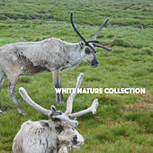 White Nature Collection by Various Artists