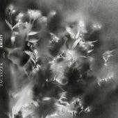 Kwiaty by Jacaszek