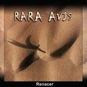 Renacer de RaRa Avis