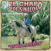 Entre la Mafia de El Chapo De Sinaloa
