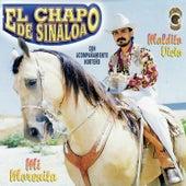 Maldito Vicio de El Chapo De Sinaloa