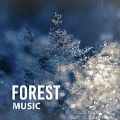 Forest Music – Nature Sounds for Rest, Relaxing Birds Singing, Soothing Melodies, Pure Mind, Stress Relief, Calming Sounds de Healing Sounds for Deep Sleep and Relaxation