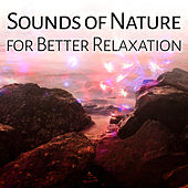Sounds of Nature for Better Relaxation – Birds Music, Nature Sounds, Deep Sleep, Peaceful Mind, Stress Relief by Deep Sleep Relaxation