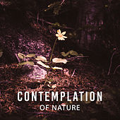 Contemplation of Nature – Sounds for Relaxation, Stress Relief, Deep Sleep, Nature Sounds, Relaxing Therapy, Sounds of Nature, Harmony, Calmnes by Deep Sleep Relaxation