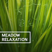 Meadow Relaxation – Natural Sounds, Nature Music, Outdoors Sounds, Relaxing Nature, Take a Break and Rest by Organic Sound