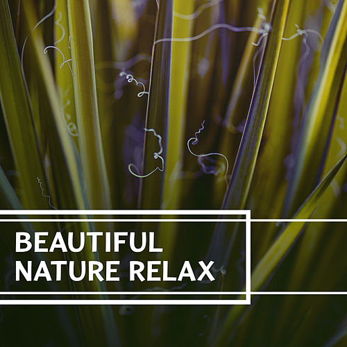 Beautiful Nature Relax – Sounds of Nature Relaxation, Outdoors Sounds, Rain, Forest Sounds, Meadow Songs, Ambient Relaxation by Nature Sound Series