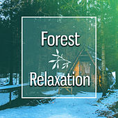 Forest Relaxation – Music to Calm Down, Stress Relief, Nature Sounds to Focus Mind, New Age by Relaxing Sounds of Nature
