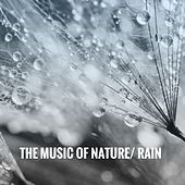 The Music of Nature: Rain by Various Artists