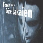 Forest Enter Exit by Deine Lakaien