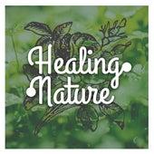 Healing Nature – Peaceful Music for Spa, Wellness, Deep Massage, Restful Sleep, Relaxing Waves, Sea Sounds, Stress Free, Asian Music by Deep Sleep Relaxation