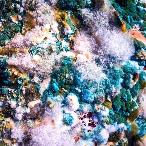 Plasticine by Helen Fry