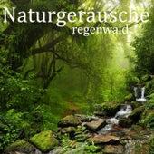 Naturgeräusche: Regenwald von Entspannungsmusik